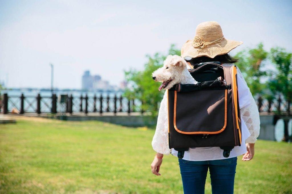 Лучшие сумки рюкзаки переноски для кошек и собак