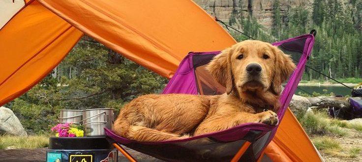Как организовать кемпинг с собакой